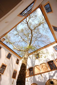 | ♕ | Hédervár Castle Court Tree | by © Istvan    via nemoi: quoth: ysvoice: capital-t-truth