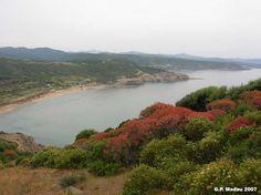 Macchia costiera- Funtanazza - Arbus- Macchia ad Euforbia, Fillirea, Ginepro macrocarpa e fenicio
