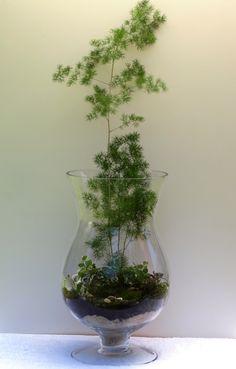 Terrarium with asparagus fern and shell. J. McCollum