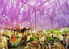 Almere Floriade 2022, The Netherlands : Plant Library Design by MVRDV