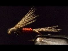 Daves Emerger. Dave McKee ties his emerger fly pattern for The Weekly Fly. Free fly tying video.
