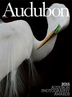 Photographer Melissa Groo's image of a Great Egret taken in Port Richey, Fla. won the grand prize in the 2015 Audubon Photography Awards and is featured on the cover of the May-June 2015 issue of Audubon Magazine. Photography Awards, Award Winner, Natural World, Best Brand, Habitats, Wildlife, Elephant, Nature, Port Richey