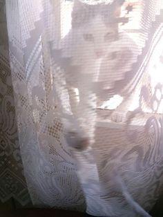 Não é se escondendo atrás das cortinas da vida que você progridirá.