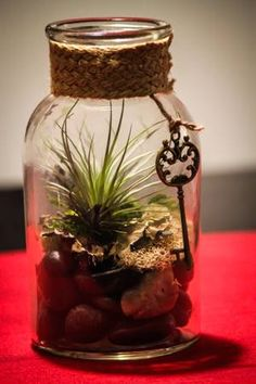Glass Jar with Vintage Key Teranium Air Plant River Stones and Moss Home Decor