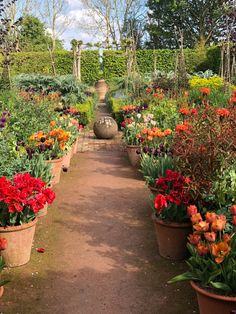 Tips and Advice — Monty Don Garden Oasis, Garden Cottage, Garden Path, Monty Don Longmeadow, Longmeadow Garden, Grass Seed, Garden Pictures, Types Of Plants, Zinnias