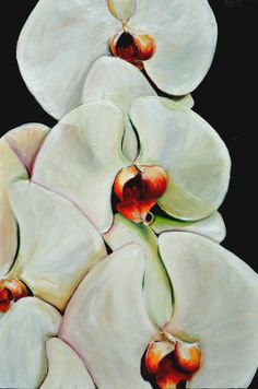 Orchid Painting, Original acrylic painting of large white orchids, white flower painting 24x36 with black background