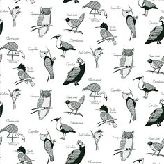 MODULO AVES DE CHILE - 3 Flora, Places To Visit, Birds, Illustration, Patterns, Design, Block Prints, The World, Little Birds