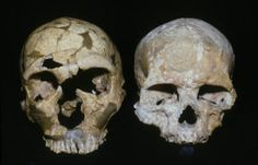 Neanderthal brains focused on vision and movement leaving less room for social networking -- ScienceDaily