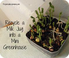 Get a jump on the gardening season make a Milk Jug Greenhouse | PreparednessMama