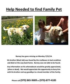 "#lostdog #Bellville #TX male yellow lab #FindBarneytheLab This family has lost the yellow lab. Their other baby has died. If anyone has seen this boy, please contact them directly. Answering on this post will not get the information to them so please contact them directly at 832-596-5482 or jessfeldtman@gmail.com  Hello,  I am inquiring about your ""Lost & Found"" animals in your facility.  We are missing our 10-year old (male) yellow-lab, Barney, who disappeared on Monday, July 21st. His brother, Pete, passed away last Monday and we have yet to locate Barney since. We have searched tirelessly in Bellville and have gone as far as posting a $300 Reward for his return (alive or dead). We feel Barney might have been picked up due to zero evidence of him being deceased close by our property and surrounding area. If Barney is deceased, we would like the opportunity to at least bury him on our property next to his brother. This has been extremely heartbreaking for our family to lose our 2 beloved pets the same day. Our family would be forever grateful for ANY help from anyone that can bring us closure.  Characteristics of Barney: 10 Years Old Pure breed Labrador Retriever About 100 lbs Neutered Has slight scar under right eye His bark sounds more like a ""yelp"" and ""hackle"".  REWARD: $300. Please contact me if your shelter has our precious family member or have seen him. Thank you for your time. Jessica Feldtman Bellville, TX 832-596-5482"