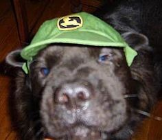 Neo as a puppy with John Deere hat.