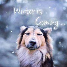 →instagram : @hermosa_naturaleza_ig   http://instagram.com/p/we1lcmGoOu/   →Facebook : www.facebook.com/hermosanaturaleza2/    #dogs #perros #animals #animales #pets #mascotas #love #nature #naturaleza #winter #invierno #quotes #frases #citas #nieve #snow #cold #navidad # Christmas