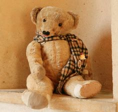 Aloysius the famous bear