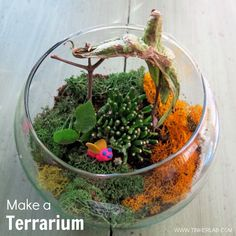 Wouldn't this be a sweet holiday gift? How to make a Terrarium with kids.