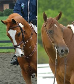 Training Tips: Selecting the Right Bit for Your Horse. People need to pay attention to this stuff; it matters!!!!