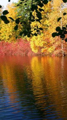River, Trees, Reflection, Autumn | Automne | Télécharger le fond d'écran 1080x1920. Téléphones Mobiles, Apple iPhone 6 Plus :: WallpapersFund.com