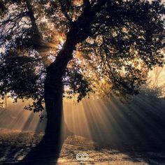 Photo du jour #134 : Mystic Tree