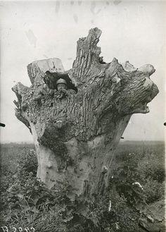 un arbre vidé sert de poste optique pour l'artillerie française   anonyme,1917, Médiathèque de l'architecture et du patrimoine, Paris