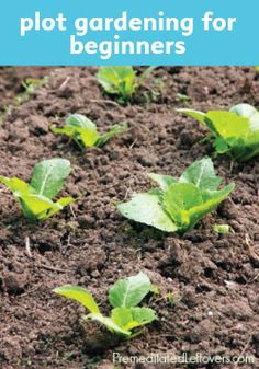 No green thumb? Here's a DIY tutorial to start gardening.