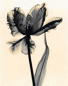 xray flower. I want as a tattoo!!!