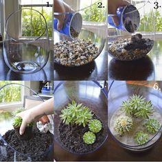 How to Make a Succulent Terrarium - proiect wedding Terrarium succulentes Succulents In Glass, Cacti And Succulents, Planting Succulents, Planting Flowers, Plants In Glass Bowl, Glass Vase, Cactus Plants, Succulent Gardening, Garden Plants