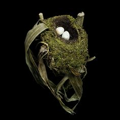 Birds Nests- Beals documents: the resourcefulness of birds who transform sticks, twigs, human and animal hair, moss, lichen, feathers, mud, and found human objects into snug little homes!