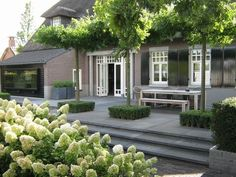 Don't be tempted to overspend when creating the perfect outdoor space. The large backyard landscaping ideas can get costly quickly if you're not careful. Privacy Landscaping, Backyard Privacy, Backyard Patio, Backyard Ideas, Privacy Hedge, Garden Privacy, Balcony Garden, Back Gardens, Outdoor Gardens