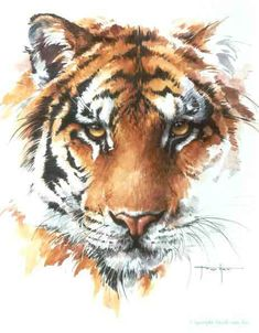 when I was a baby and I threw fits,my dad would carry me over to a painting that we have of a tiger that looks a lot like. eye of the tiger Watercolor Tiger, Tiger Painting, Watercolor Animals, Watercolor Paintings, Animal Sketches, Animal Drawings, Japanese Tiger Tattoo, Tiger Artwork, Tiger Pictures