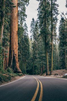 New Vintage Nature Photography Landscape Road Trips 62 Ideas Vintage Nature Photography, Forest Photography, Camping Photography, Landscape Photography, Photography Studios, Photography Ideas, Outdoor Photography, Photography Women, Photography Hashtags