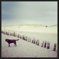 Enoying West Wittering beach
