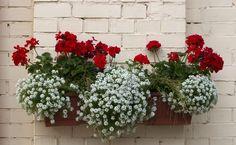 Θα ήθελες να μάθεις ποια φυτά για ζαρντινιέρες σου προτείνουμε, για να στολίσεις το μπαλκόνι, ή τον κήπο σου; 10 φανταστικά φυτά για ζαρντινιέρες για χρωματιστές συνθέσεις! Garden Plants, Planting Flowers, Diy And Crafts, Christmas Wreaths, Floral Wreath, Home And Garden, Backyard, Exterior, Holiday Decor