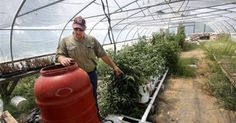 Hydroponics latest innovation for Olive Branch grower