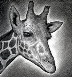 How to draw a giraffe head step by step safari animals animals