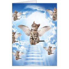 All Cats Go to Heaven where they wait for us until we meet again ~ <3