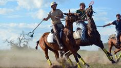 All the top men Polocrosse players came to Antelope Park for a social gathering. A weekend with a lot of speed and adrenalin! Lacrosse, Pony, Horses, Pictures, Animals, Action, Pony Horse, Photos, Animales