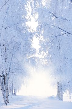 Winter White Snowy Forest Photo Backdrop Wedding Baby Shower Birch Trees Photography Background Fros