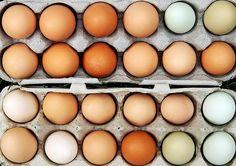 #Uova, cosa si nasconde dietro i numeri stampati sui #gusci #galline