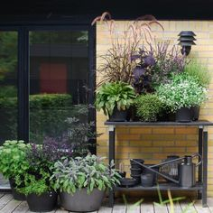 pots and containers filled with flowers, herbs and ornamental plants