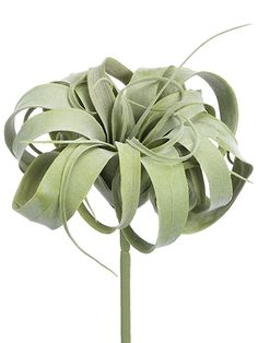 Soft Tillandsia Artificial Stem Pick -Green/Gray (pack of for sale online Home And Garden, Green, Plants, Garden, Succulents, Artificial, Artificial Succulents, Tillandsia