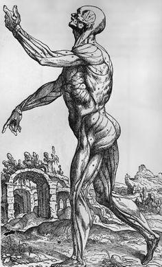 lesarcsplastiquesbd: Anatomie : André Vésale