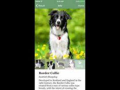 Fetch, la aplicación que con una foto nos dice la raza de un perro - http://www.actualidadiphone.com/172764-2/