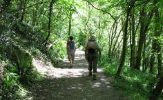Plymouth City Council - Forder Valley Local Nature Reserve