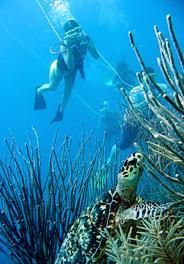 The Belize Barrier Reef on Ambergris Caye, Diving in the Caribbean