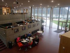 Nuestros alumnos en la biblioteca