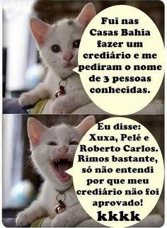 Coisas da Vida: Veja algumas das piadas do gato do face mais hilárias
