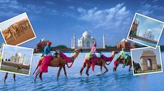Book North India tour packages from Chennai and witness the diverse culture and vibrant tourist attractions of North India today. Honeymoon Tour Packages, Vacation Packages, International Holidays, India Travel Guide, India Tour, India India, Visit India, Golden Triangle, North India