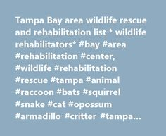 Tampa Bay area wildlife rescue and rehabilitation list * wildlife rehabilitators* #bay #area #rehabilitation #center, #wildlife #rehabilitation #rescue #tampa #animal #raccoon #bats #squirrel #snake #cat #opossum #armadillo #critter #tampa #hillsborough http://free.nef2.com/tampa-bay-area-wildlife-rescue-and-rehabilitation-list-wildlife-rehabilitators-bay-area-rehabilitation-center-wildlife-rehabilitation-rescue-tampa-animal-raccoon-bats-squirrel-snake/  # Tampa Bay area wildlife…