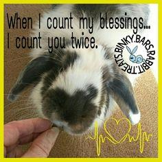 #binky_bars #rabbit #treats #UK