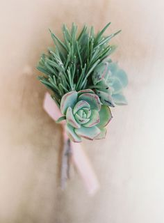 Succulent and Fresh Herb Boutonniere | Brides.com