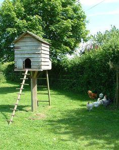 Bildresultat för high rise chicken coops